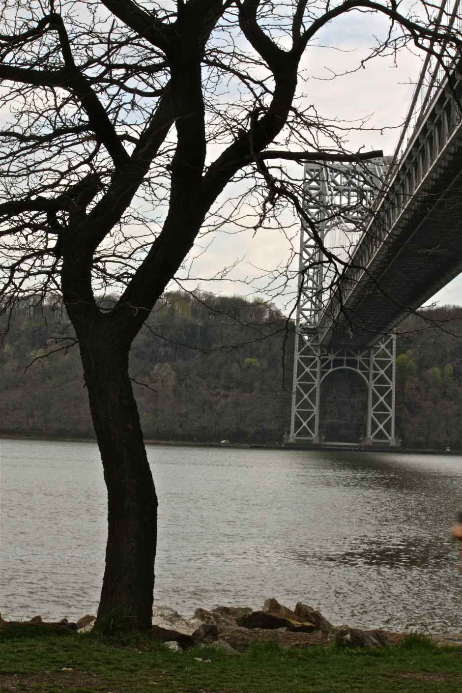 Upstate Manhattan:  Bridge and Tree