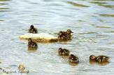 Ducks2 smpp