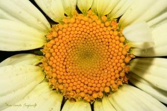 sunflower1 pp3
