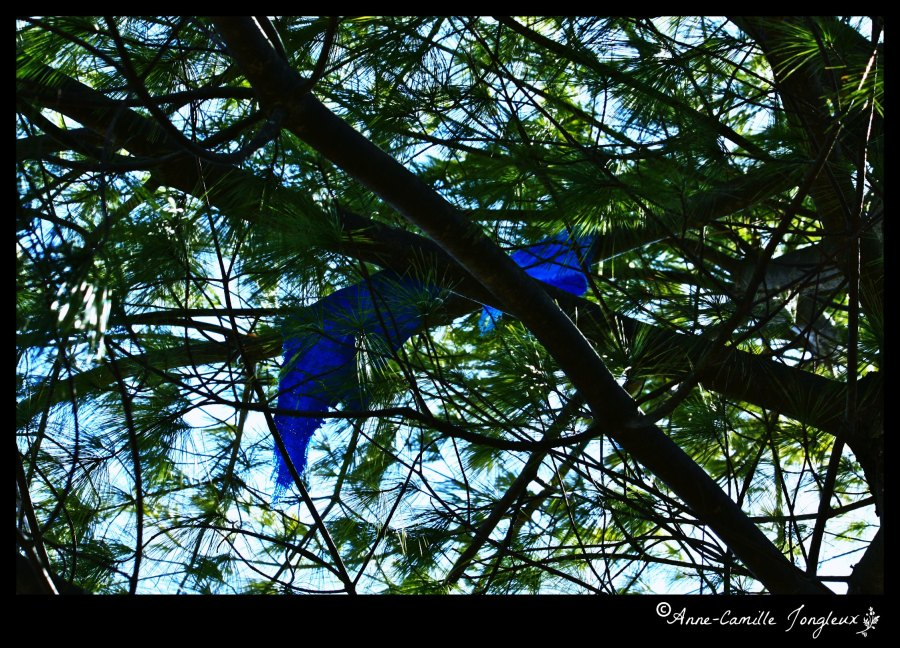 Blue sky, green branches, blue flags