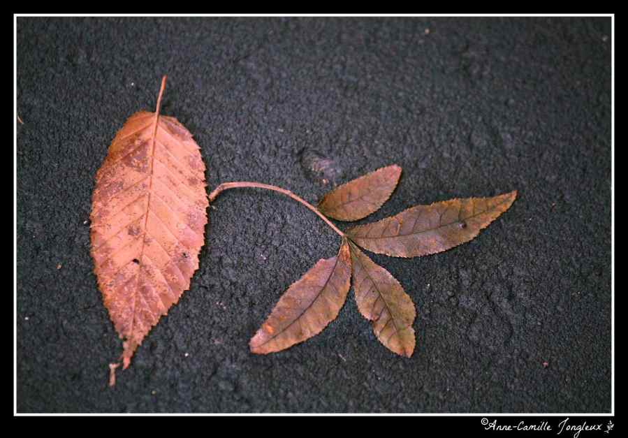 Two Leaves, left where fallen