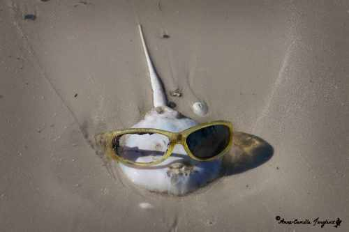 Lost his shell, still has his glasses