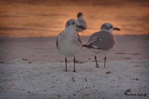 Gulls, Sunset, Sand, Sea:  Wonder- full