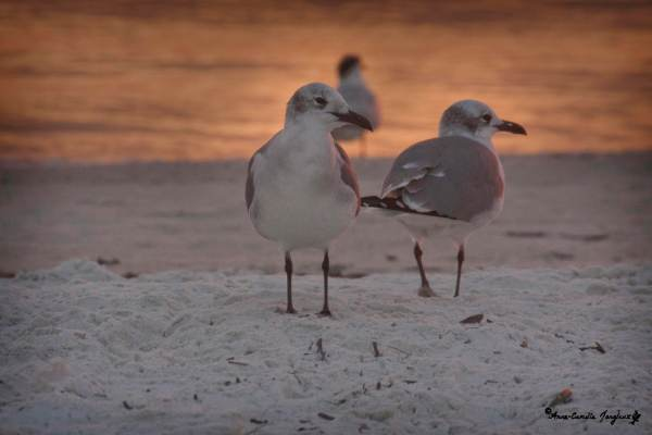 Gulls, Sunset, Sand, Sea:  Wonder- full