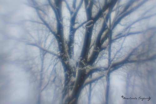 Old Oak, Late December