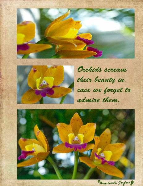 OrchidsCollage