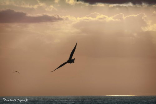 Seagull, Late Afternoon