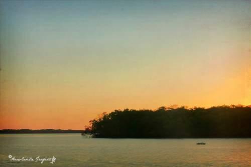 Early Morning Mangrove