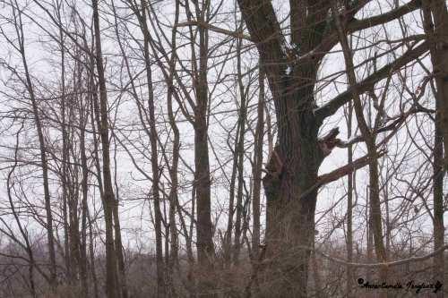 Old Oak, February