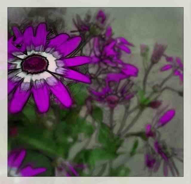 PurpleSpringFlower-Web