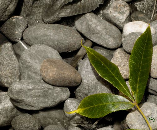 Green Leaf, Grey Rocks