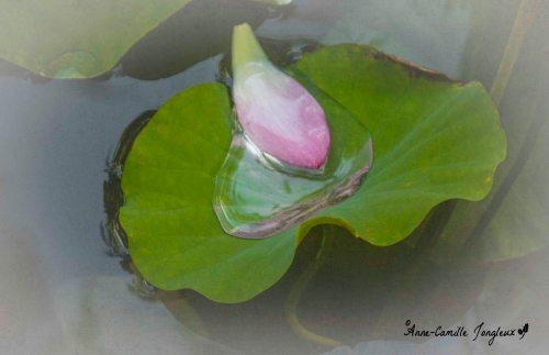 Leaf, Petal, Water