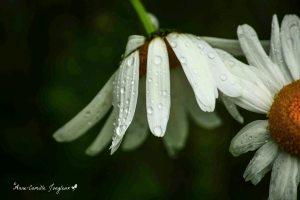 Weeping Flowers