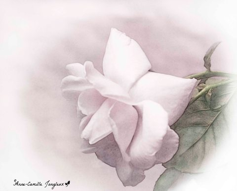 roses, emerson, art