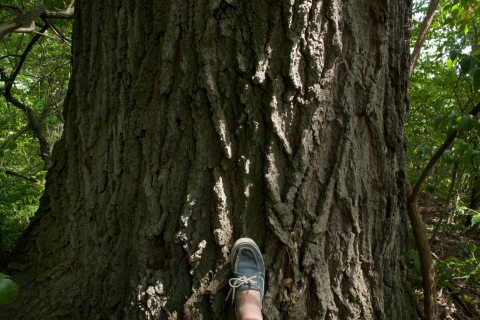 Perspective:  Size 6 shoe at the base of the tree.