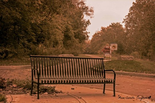 Bench, Early Morning