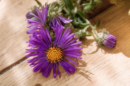Wildflower-Bunch-Aster2